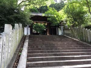 8. Shinonome